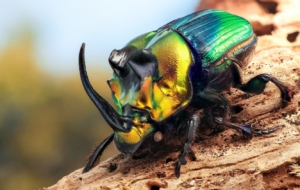 Beetle Insect Images