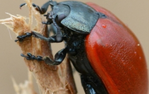 Beetle Insect Wallpapers Pack