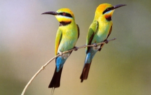 Birds Wallpapers For Android