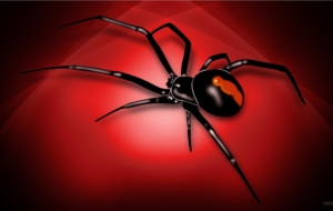 Black Widow Spiders Computer Wallpaper