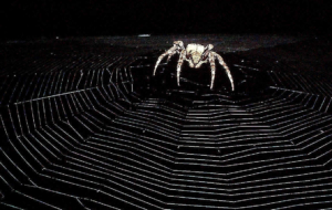 Black Widow Spiders Widescreen