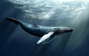 Bowhead Whales Wallpaper