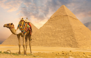 Camels Wallpapers HQ