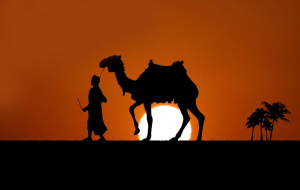 Camels Wallpapers For IPhone