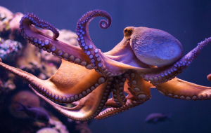 Cephalopod Images
