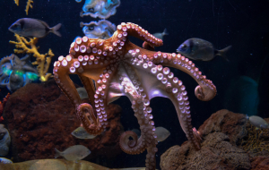Cephalopod Wallpapers HD