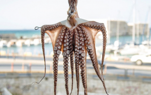 Cephalopod Wallpapers For Android