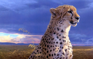Cheetah Beautiful Wallpaper