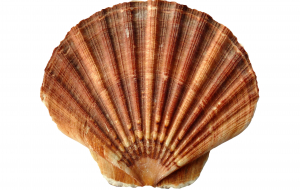 Clams Full HD Wallpapers