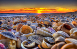 Clams Images