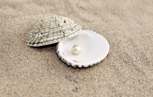 Clams Pictures