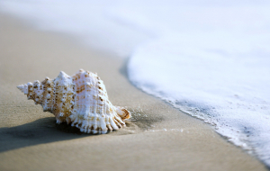 Clams Wallpapers For Android