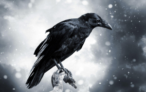 Crows Wallpaper