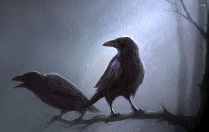 Crows Wallpapers For Android