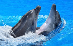 Dolphin Images