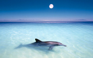 Dolphin Wallpapers HQ