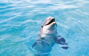 Dolphin Wallpapers For Android