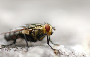 Fly Insect 4K Wallpapers