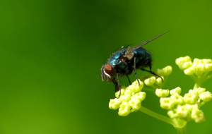 Fly Insect High Resolution