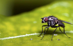 Fly Insect In HQ