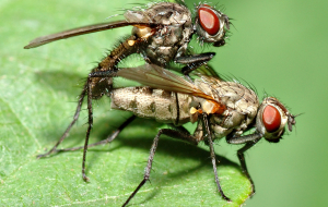 Fly Insect Photos
