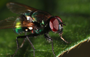 Fly Insect Pics