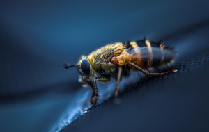 Fly Insect Pictures