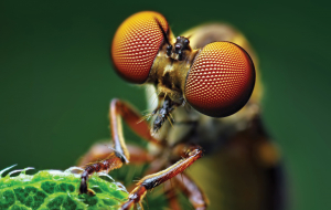 Fly Insect Wallpapers HQ