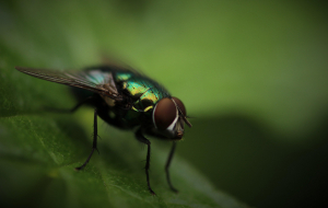 Fly Insect Wallpapers For Android