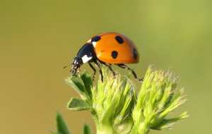Fly Insect Wallpapers For IPhone
