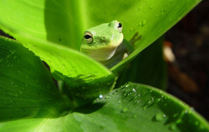 Frog In HQ