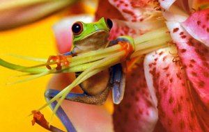 Frog Wallpapers HQ