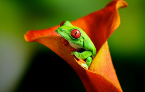 Frog Wallpapers For Android