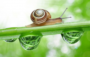 Garden Snail Wallpapers For Android