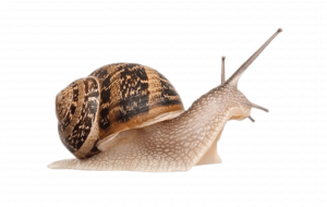Garden Snail Wallpapers For IPhone