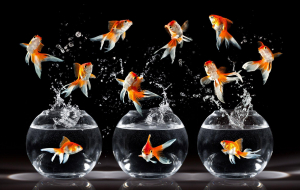 Goldfish Wallpapers For Android