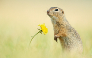 Gopher Wallpapers For Android