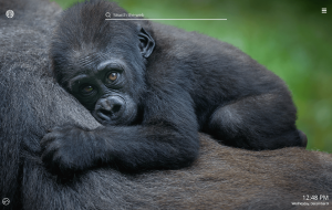 Gorilla Wallpapers For Android